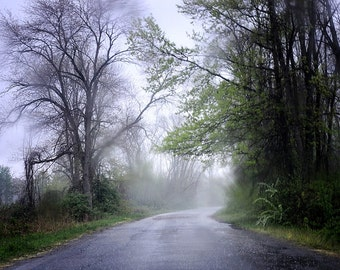 Mystical River Road - Fine Art Photography 8x12 print - Nature, Green, Gray, Black, Travel