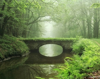 Photography, bridge in the forest, high gloss, premium paper, signed