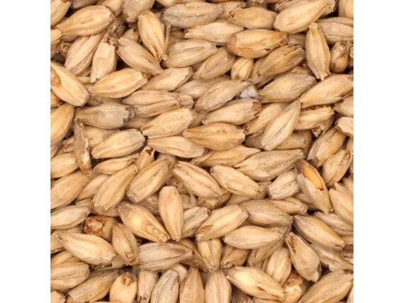 All Natural Raw 6 Row Brewers Malted Grain For Home Beer Brewing 1 Pound