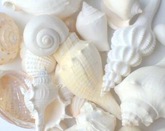 1 lb White Seashell Mix for Beach Wedding - Assorted White Shell Mix - Bulk Shells
