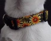 Sunflower Garden KOUTURE Adjustable Dog Collar-Ready To Ship