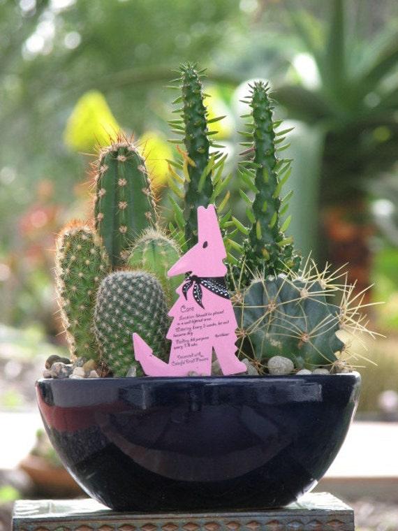 Desert Dish Garden 8 Inch Diameter Ceramic Pot From