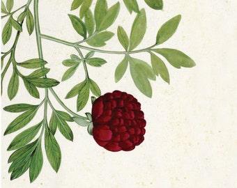 Vintage Botanical Wedding Invitation