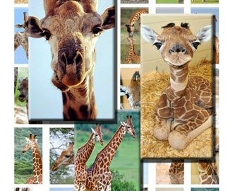 Giraffes African Zoo Animals Baby Digital Images Collage Sheet 1x2 inch Rectangles Domino Commercial INSTANT Download RD08