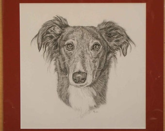 Mounted original pencil drawing of a Saluki lurcher dog