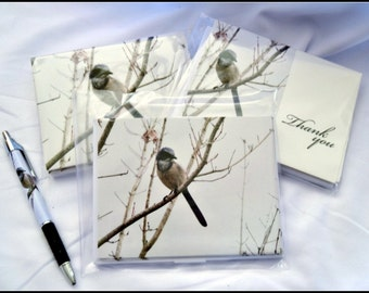 10 Note cards, 10 Thank you cards, 10 postcards with envelopes with matching pen.cards, Bird,  scrub jay, nature, photography, wildlife.