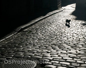Catwalk - Animal Fine Art Photography - Black and White photo - Home Decor - Wall Art - Dark Cityscape