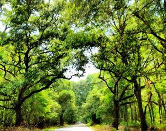 Kiawah Island's Angel Oak Trees - Professional Archival Print