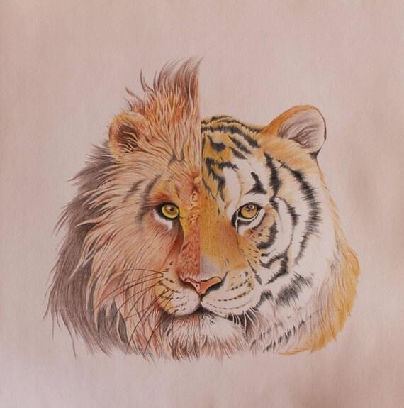 articles similaires original dessin au crayon de couleur le lion tigre sur etsy. Black Bedroom Furniture Sets. Home Design Ideas