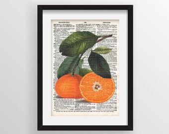 Oranges - Botanical Reprint on Recycled Dictionary Page
