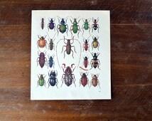 bugs book illustration paper vintage collage