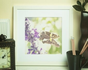 Purple Butterfly -Fine Art Photographic Print
