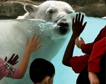 Polar Bear Out For Summer Swim