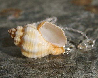 Sea Shell Necklace, Minimalist Shell Necklace, Beach Wedding, Surfer, Beach, Vacation, Hawaii, Minimalist