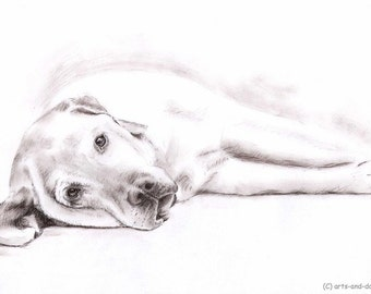 Labrador - Fine Art Print 30x40 cm - Drawing with Sepia charcoal