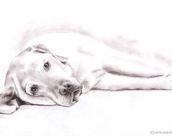 Labrador - Fine Art Print