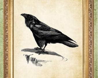 Raven Art Print Edgar Allan Poe's Raven Steampunk Print Wall Decor
