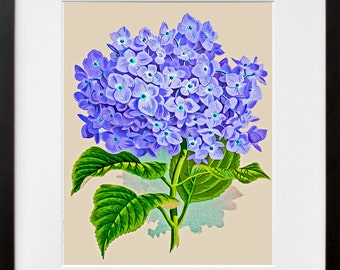 Flowers Print Vintage Kitchen Art Illustration