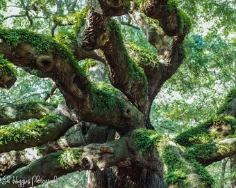fine art photography print, nature photography, landscape photography, wall art, home decor, office decor, Angel Oak tree