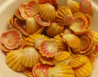 Sunrise Shells lot of 20 pcs shell assorted medium and large size, From North Shore Oahu, Hawaii