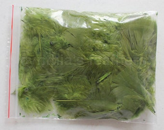 """10g (0.35Oz) olive green 3~4"""" turkey plumage feathers 80~120 counts, for crafting, sewing, etc, SKU: 7G12"""