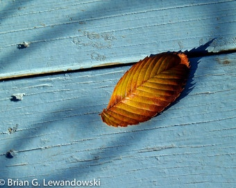 Leafy Contrast