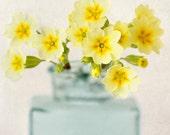 Primrose Art Print, Flower Photography, Floral Wall Art, Flower Art, Yellow, Teal, Fine Art Photography Print