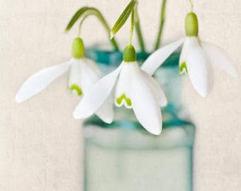 Flower Art Print, Flower Photo, Floral Photography Print, Shabby Chic Wall Art, Home Decor, Snowdrops