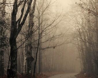 landscape photography Autumn fine art photography fog mist woodland home decor