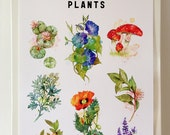 """13"""" x 19"""" A Guide to Psychotropic Plants Print"""