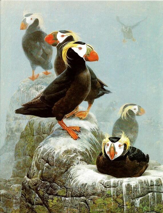 Bird Print Puffin Print Tufted Puffins Vintage Audubon