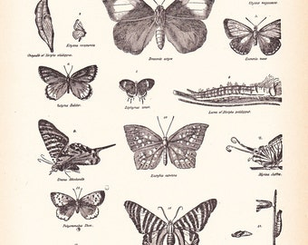 1892 Butterfly Print - Vintage Antique Book Plate for Natural Science or History Lover Great for Framing 100 Years Old