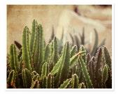 Southwestern Decor, Southwest Photography, Green Cactus Photography, Nature Photography, Rustic Southwest Art, Arizona Texas, brown