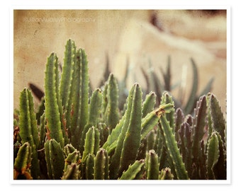 Southwestern Decor, Southwest Photography, Green Cactus Photography, Nature Photography, Rustic Southwest Art, Arizona Texas, brown