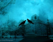 Surreal Gothic Raven Photo, Haunting Dark Blue Ravens Crows Gate Photograph, Gothic Ravens Spooky Eerie Blue Gate, Halloween Crow Photograph