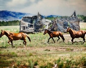 Mustang Photo, Wildlife Photography Print, Wild Horse Photo, Abandoned House, Abandonment, Wild West, American Mustang, Black Hills, brown