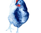 Curiosity the Chicken art print - A3 blue and red limited edition bird art watercolor blues