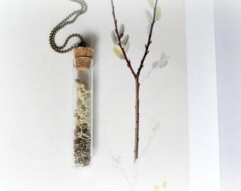 Reindeer moss - terrarium vial necklace Botanical specimen curiosity bottle real preserved plant flower mint green lichen grey Gift for her
