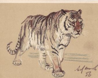 "A. Laptev ""Tiger"" Postcard -- 1956"