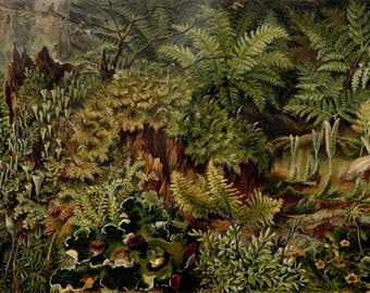 1897 Antique fine lithograph of FERNS. 119 years old gorgeous print.