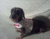 Doxie Dot Harness