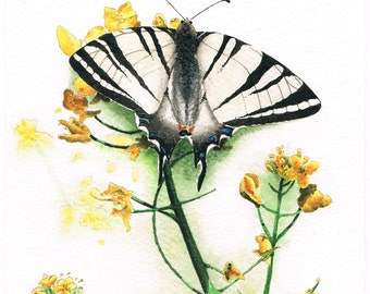 Scarce Swallowtail Butterfly Original Watercolor Painting, Illustration, Int'l Free Shipping