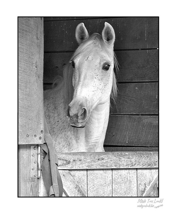 Fine Art print of Buckskin horse photograph