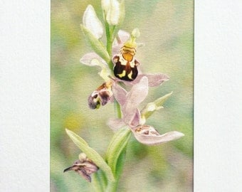 Bee Orchid card