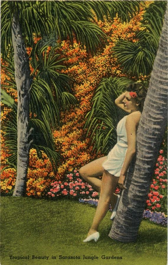 Tropical Bathing Beauty Sarasota Jungle By Postcardboutique