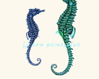 Printable art seahorse engraving instant download A4 png and jpg