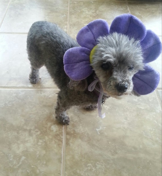 Dog or Cat Lavender Flower Hat