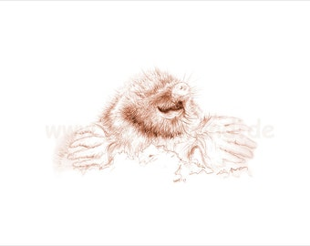 Print of a pencil drawing, sepia shaded variation - Mole (8 x 12 inch)