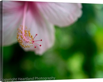 Pink Hibiscus, Flower Canvas, Photography Canvas, Gallery Wrap, Pink Flower Canvas, Macro Photography, Pink and Green, Tropical Prints