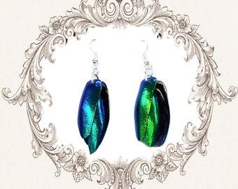 Chrysalis earrings (Elytra Beetle Wings) bugs insect jewellery shell wing